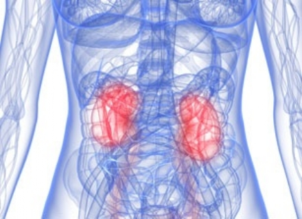 Trapianto di rene in pazienti ottuagenari